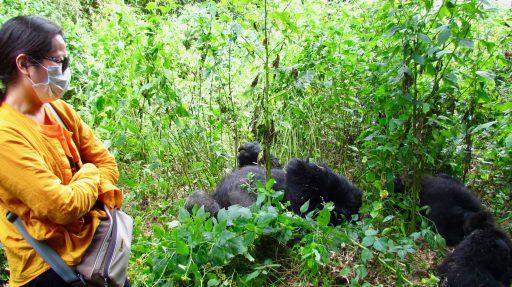 Povinné chirurgické rúška majú zabrániť penosom chorôb na nám geneticky príbuzné gorily