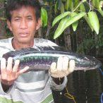 Borneo - národný park Danau Sentarum